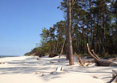 plaża w czerwcu